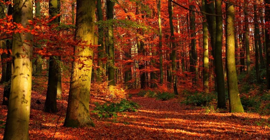 lankaran-forest